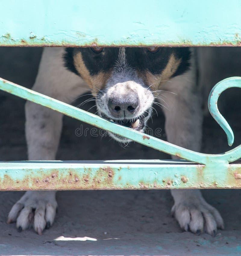 Cão irritado atrás de uma cerca imagem de stock