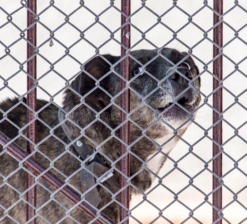 Cão irritado atrás de uma cerca foto de stock royalty free
