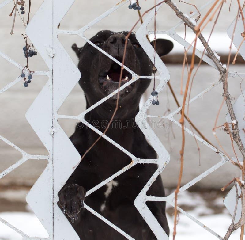 Cão irritado atrás de uma cerca imagem de stock royalty free