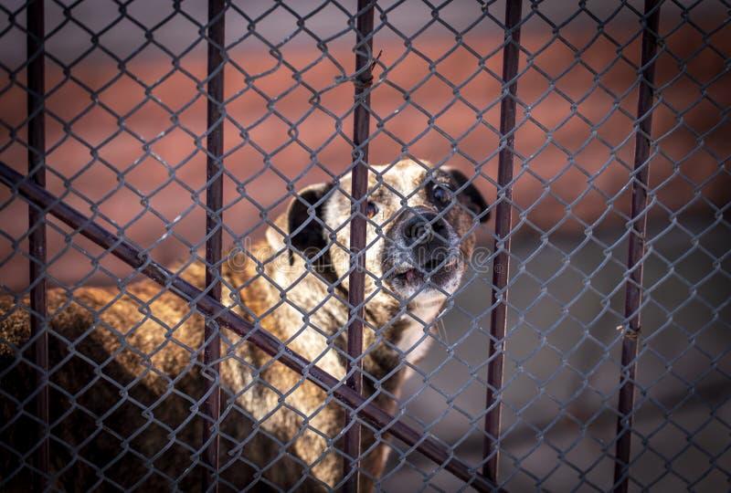 Cão irritado que descasca atrás de uma cerca do metal imagem de stock