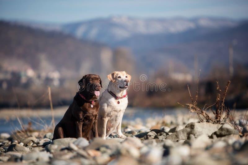 Cão Labrador do chocolate e da jovem corça do rio e do céu fotografia de stock royalty free