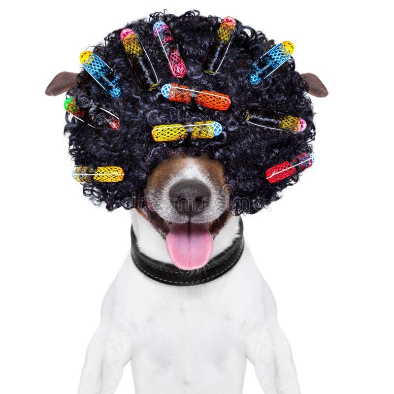 Cão louco do cabelo encaracolado foto de stock royalty free