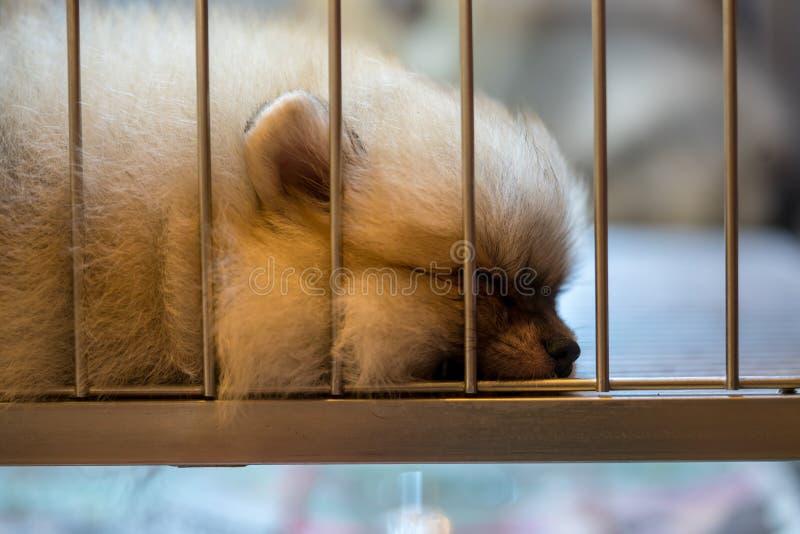 Cão marrom agradável que dorme apenas na gaiola foto de stock royalty free