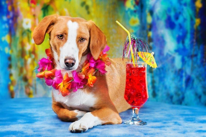 Cão misturado adorável da raça que levanta como um turista foto de stock