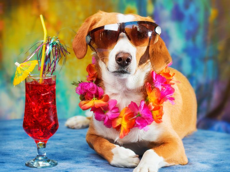 Cão misturado adorável da raça que levanta como um turista fotografia de stock