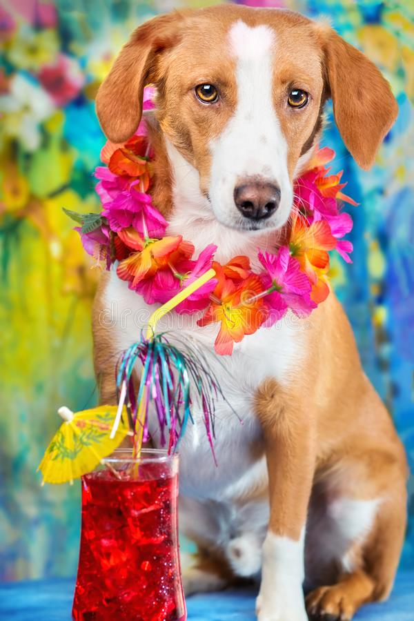 Cão misturado adorável da raça que levanta como um turista foto de stock royalty free