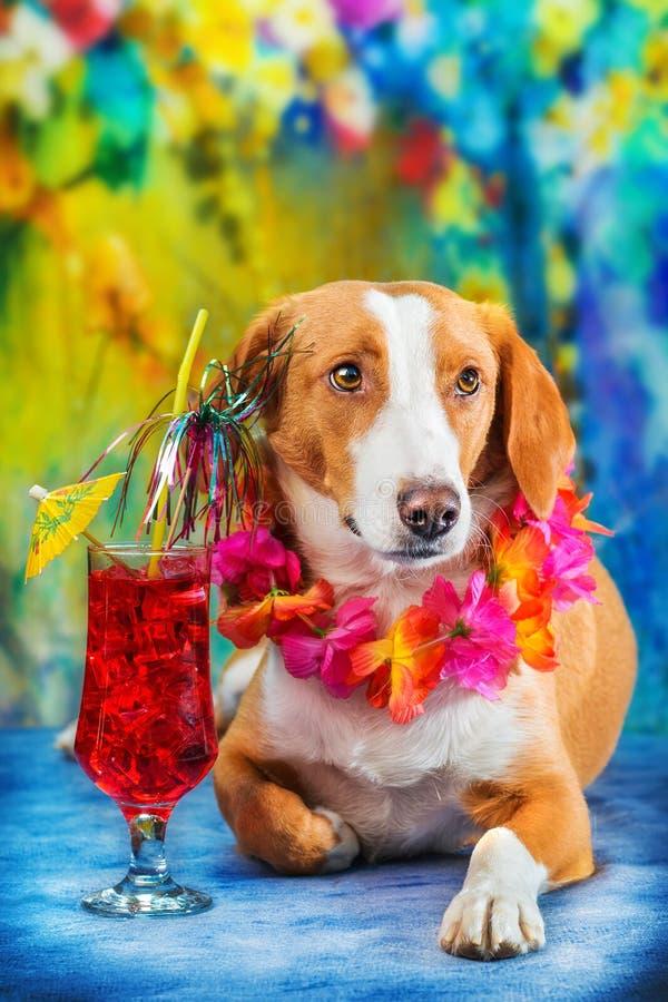 Cão misturado adorável da raça que levanta como um turista imagens de stock