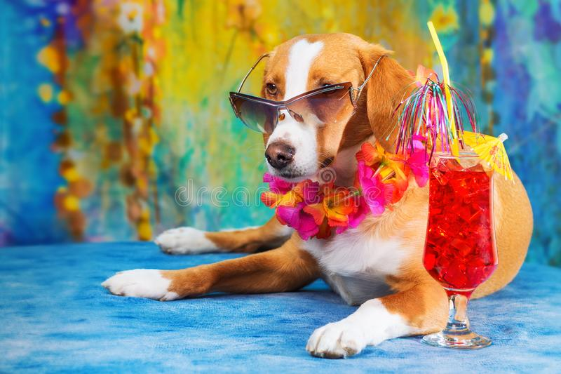 Cão misturado adorável da raça que levanta como um turista imagem de stock
