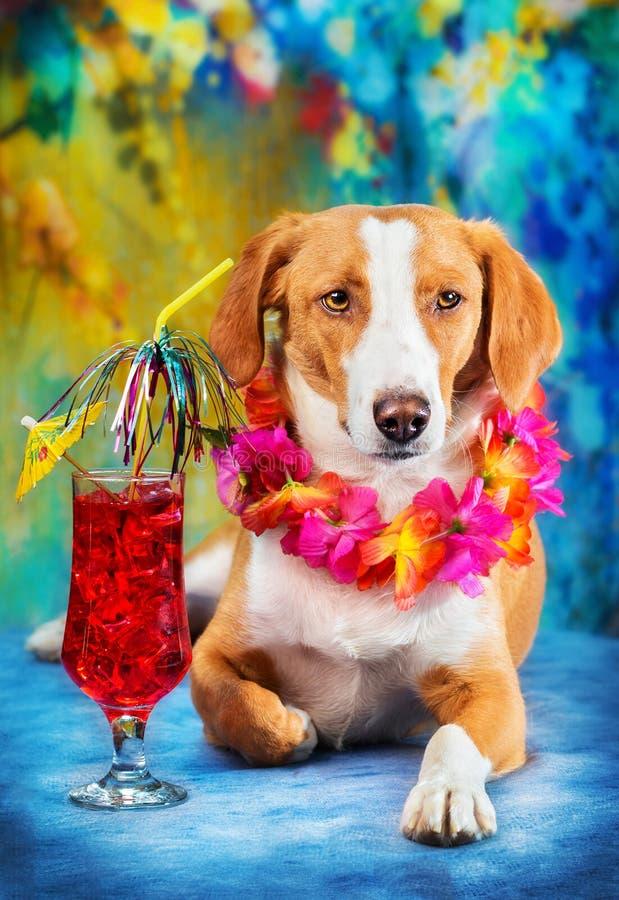 Cão misturado adorável da raça que levanta como um turista fotografia de stock royalty free