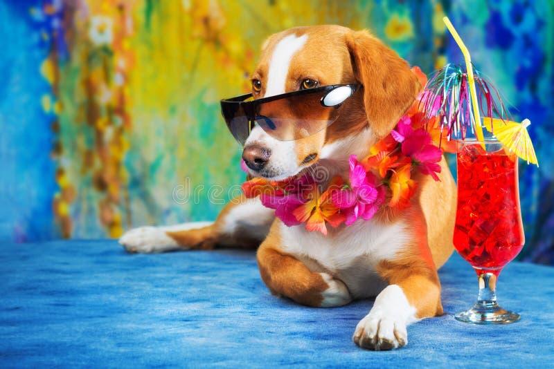Cão misturado adorável da raça que levanta como um turista fotos de stock royalty free