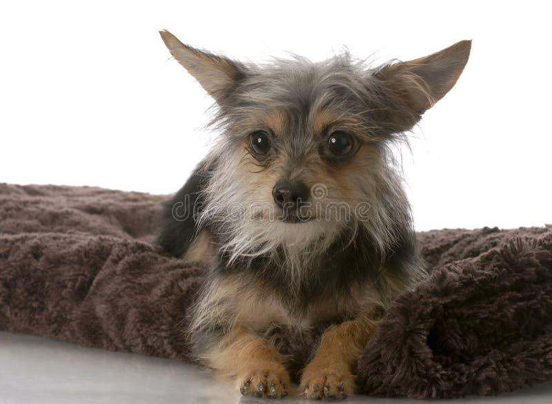 Cão misturado pequeno da raça foto de stock
