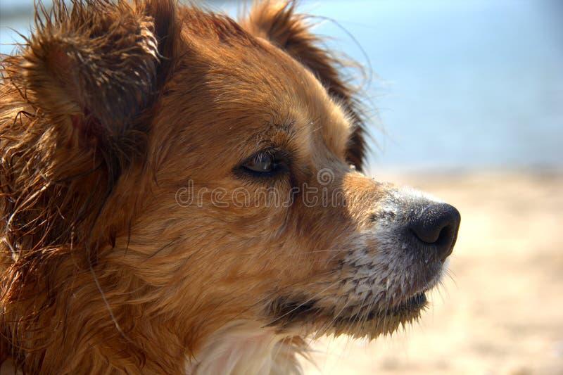 Cão molhado bonito foto de stock