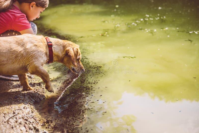 Cão molhado pelo lago fotografia de stock