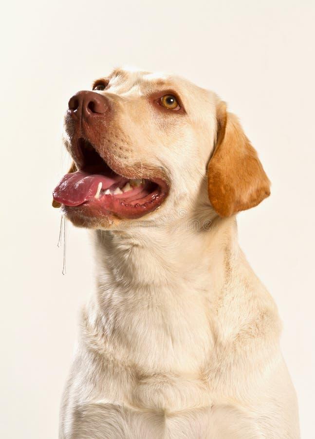 Cão morrendo de fome fotos de stock royalty free