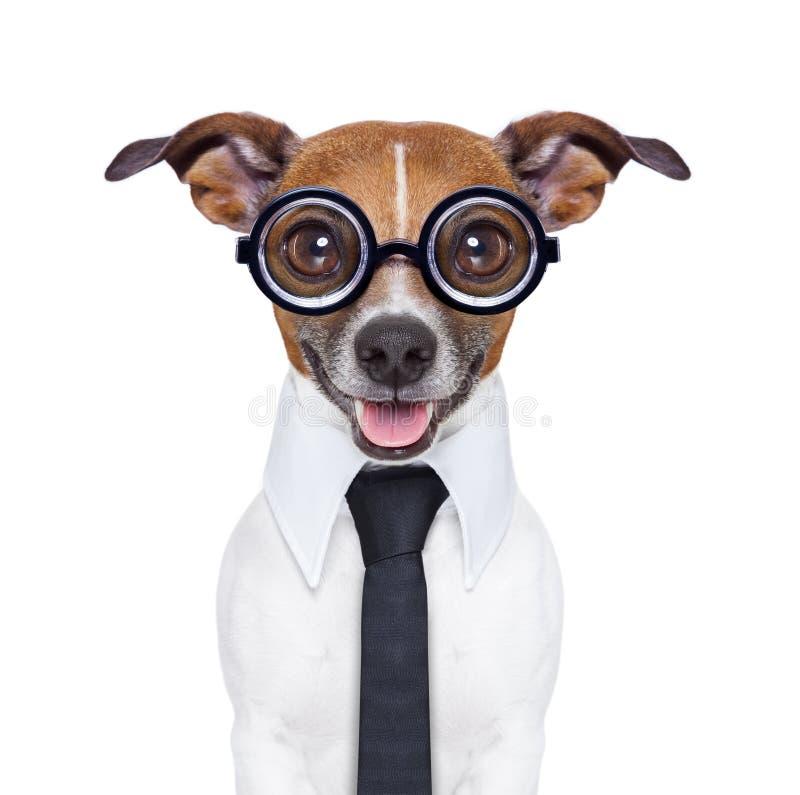 Cão mudo do negócio imagens de stock royalty free