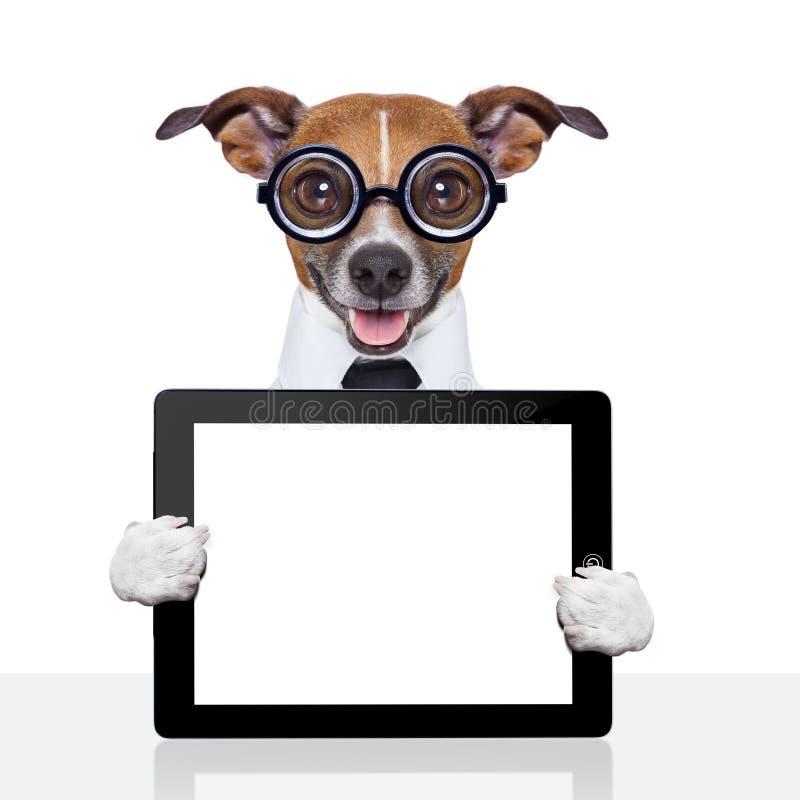 Cão mudo do negócio fotografia de stock royalty free