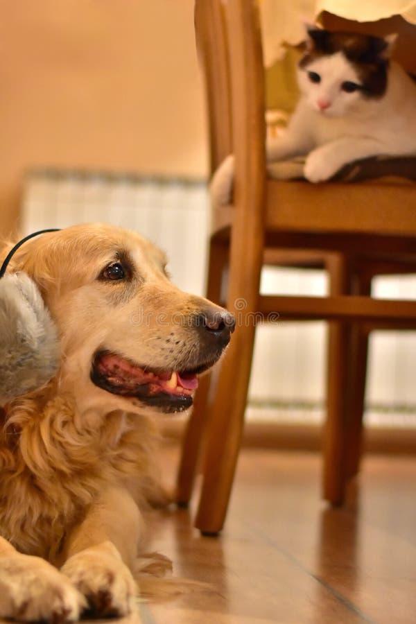 Cão muito assustado e gato curioso no ano novo imagem de stock royalty free