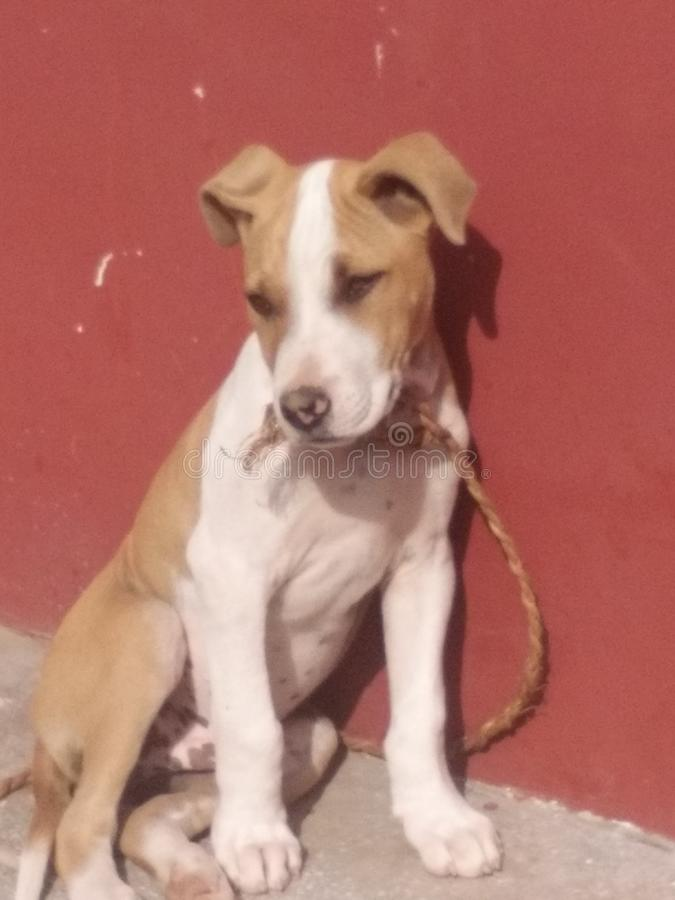 Cão muito bonito foto de stock royalty free