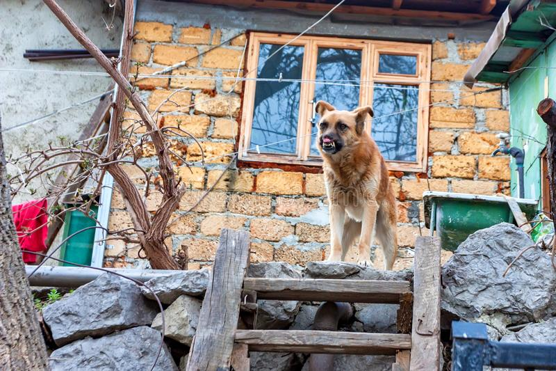 Cão mutilado fora imagens de stock