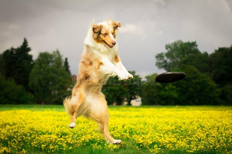 Cão na ação foto de stock