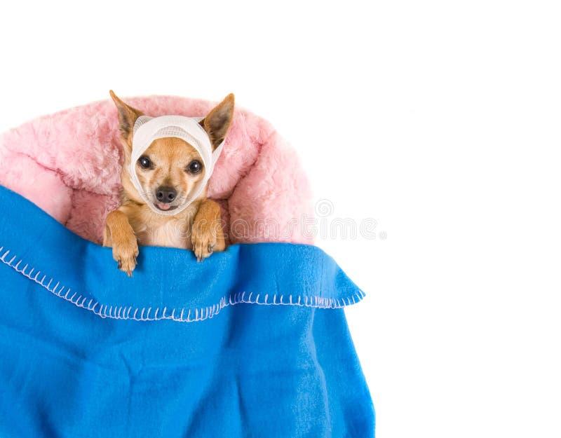 Download Cão na cama foto de stock. Imagem de furry, isolado, cama - 16863214