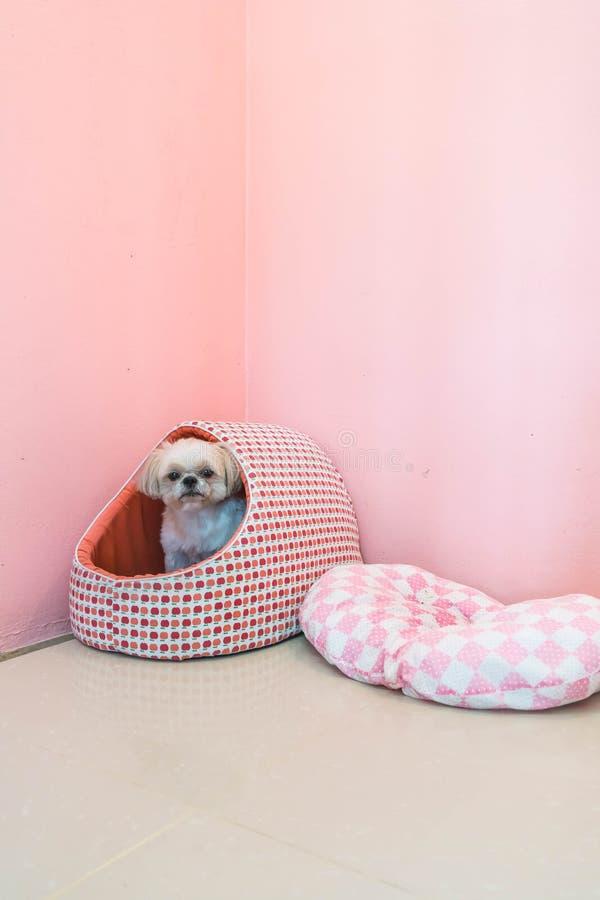 cão na cama do animal de estimação fotos de stock royalty free