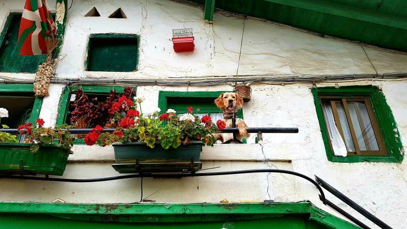 Cão na casa, Puerto Viejo, Espanha imagem de stock royalty free