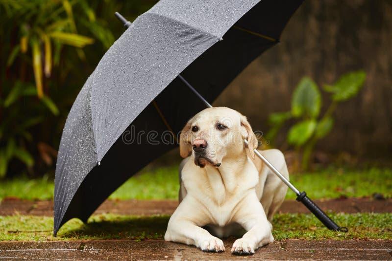 Cão na chuva imagens de stock royalty free