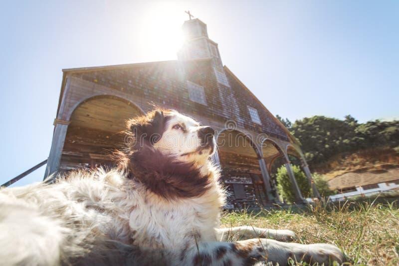 Cão na frente da igreja de Quinchao - ilha de Chiloe, o Chile imagem de stock