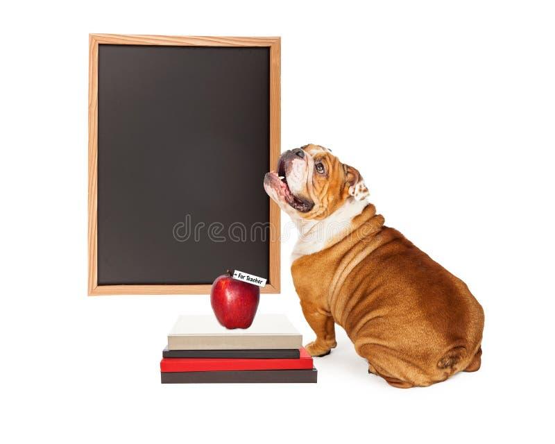 Cão na frente do quadro vazio da escola imagens de stock royalty free