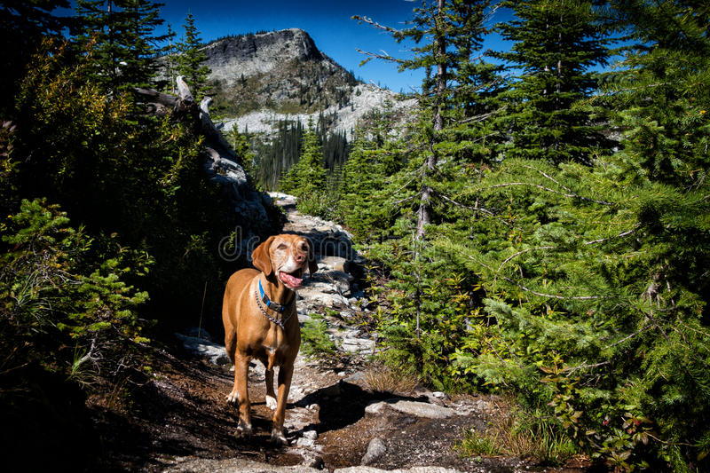Cão na fuga de montanha fotografia de stock royalty free