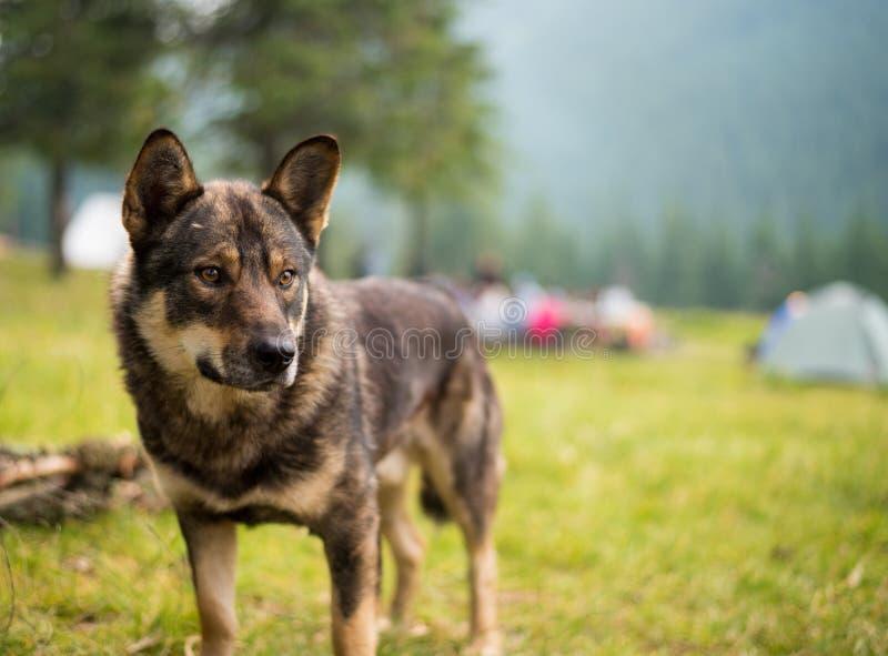 Cão na grama verde foto de stock royalty free