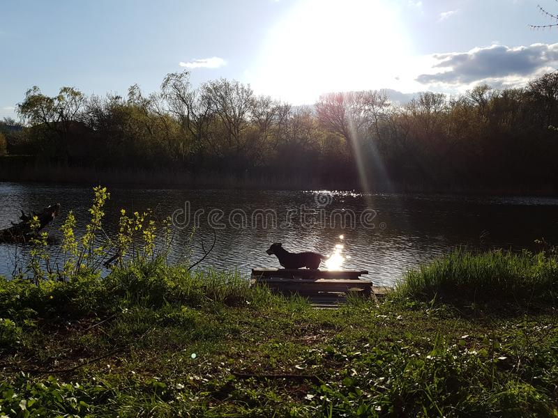 Cão na luz do sol foto de stock royalty free