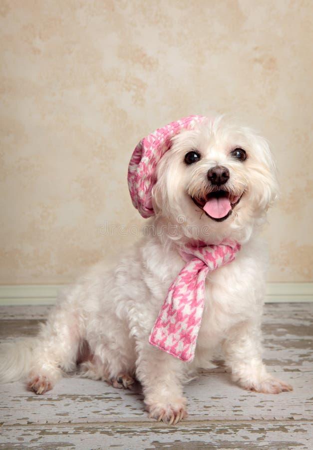 Cão na moda foto de stock