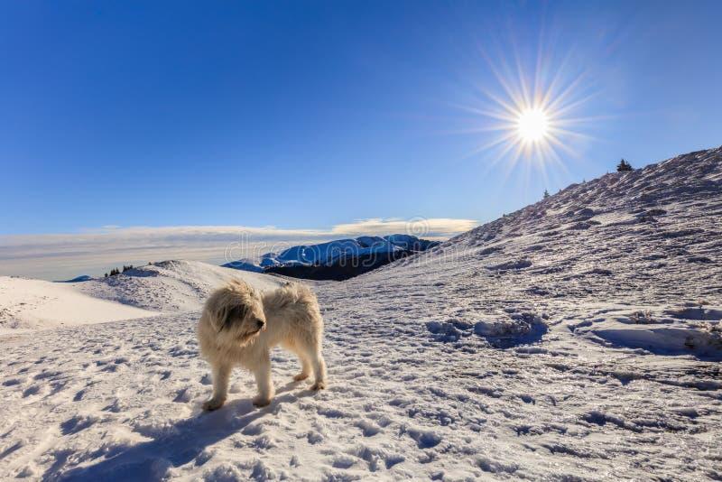 Cão na montanha imagem de stock royalty free