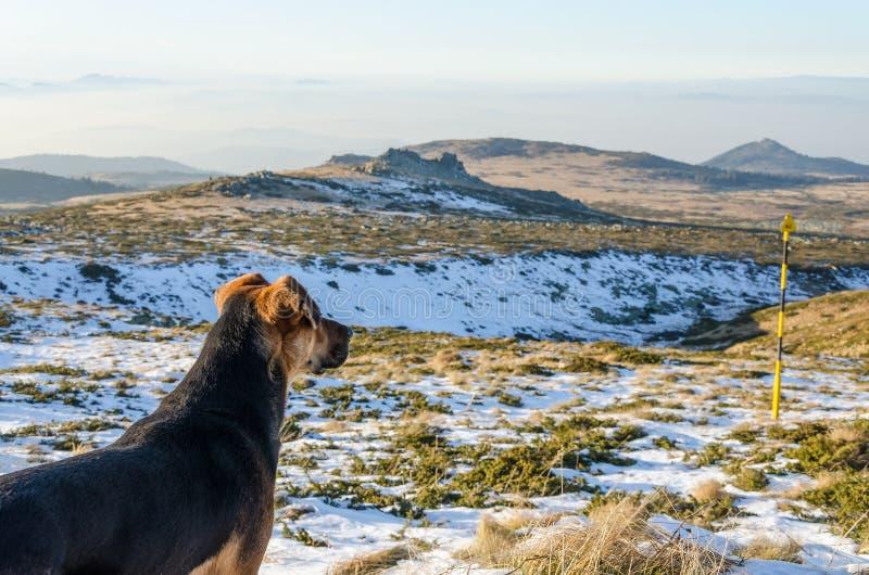 Cão na montanha imagens de stock royalty free