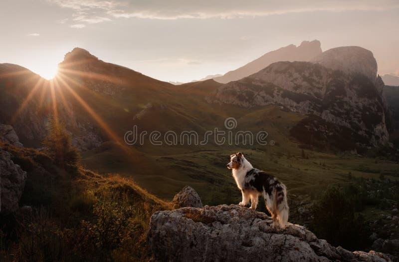 Cão na montanha no por do sol Viagem com um animal de estima??o Pastor australiano na natureza fotografia de stock royalty free