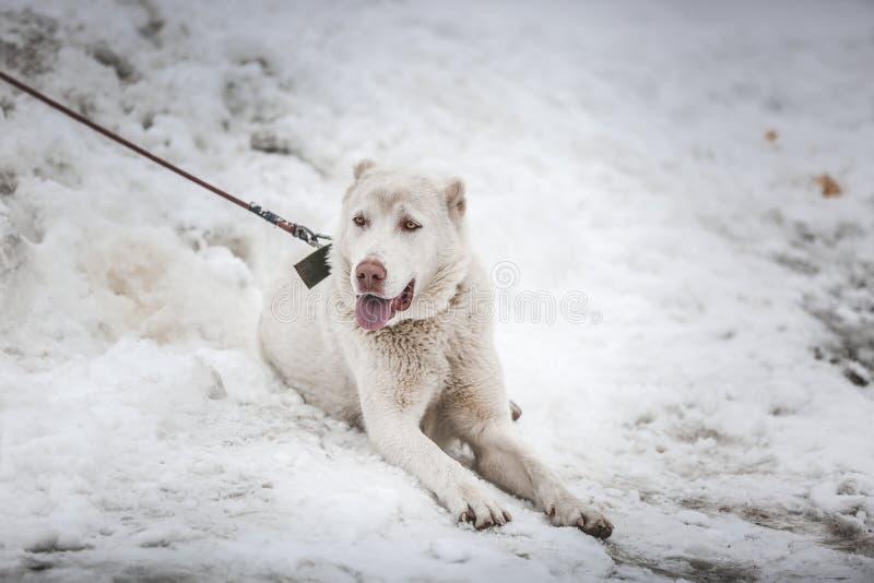 Cão na neve fotos de stock