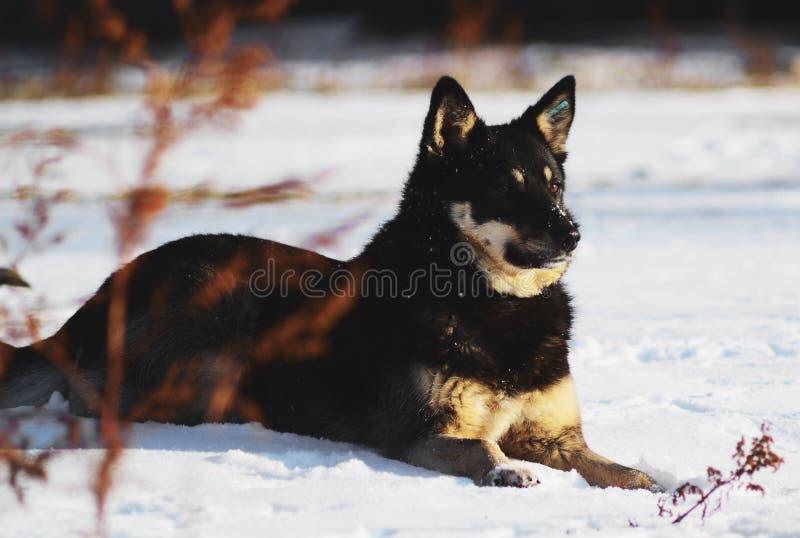 Cão na neve fotos de stock royalty free
