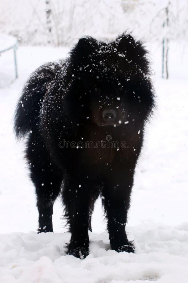 Cão na neve que olha à esquerda imagens de stock