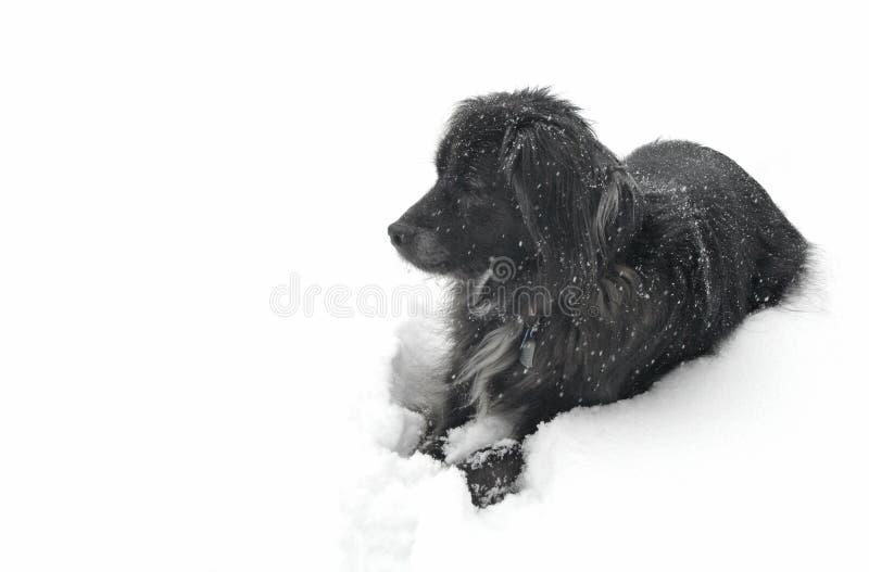 Cão na neve que olha à esquerda imagem de stock