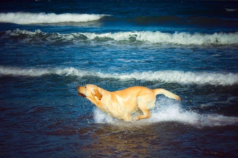 Cão na praia-Mitko fotos de stock
