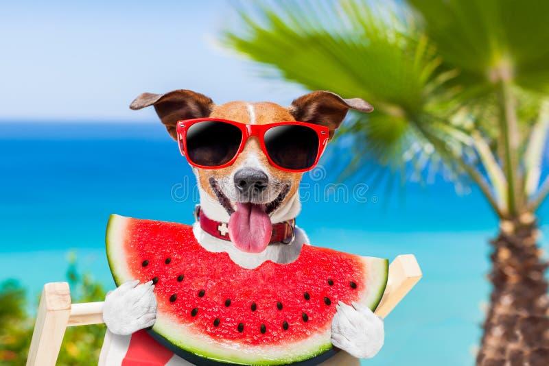 Cão na rede e na melancia fotografia de stock