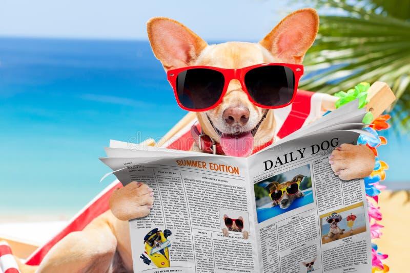 Cão na rede no verão fotografia de stock