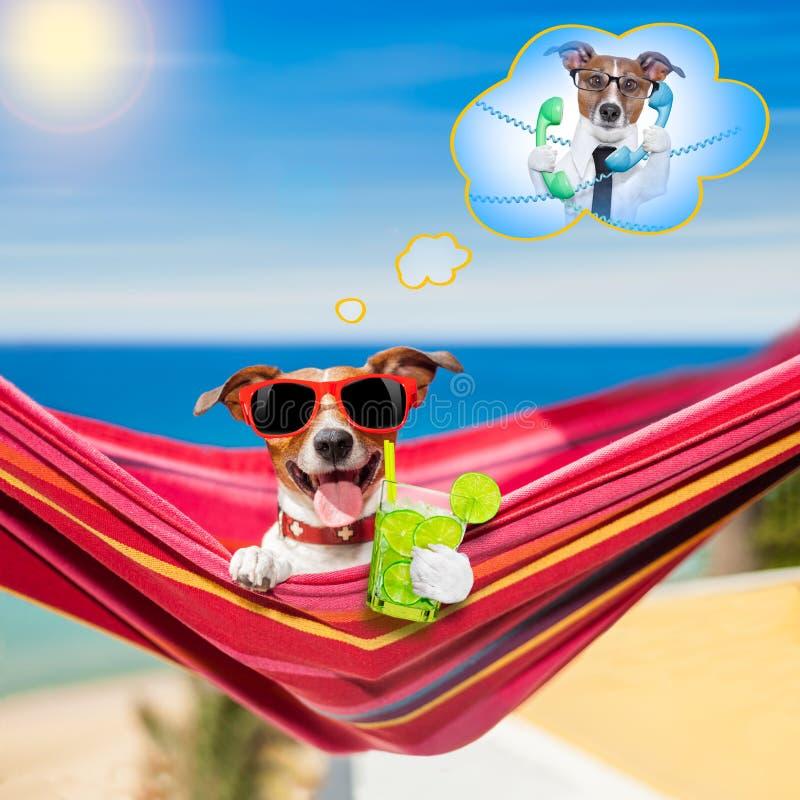 Cão na rede no verão foto de stock