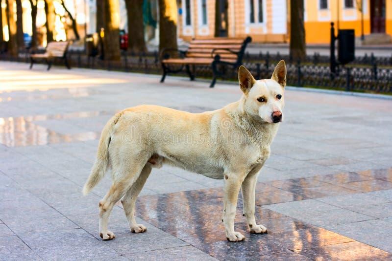 Cão na rua fotos de stock royalty free