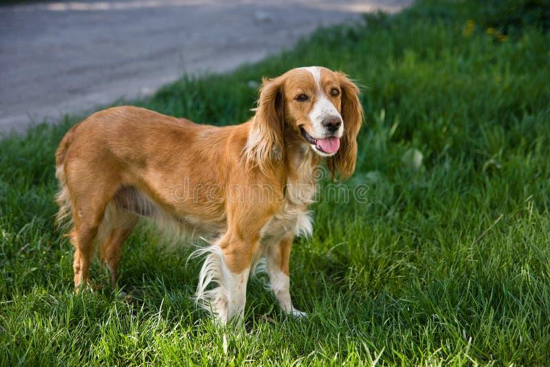 Cão na rua imagens de stock royalty free