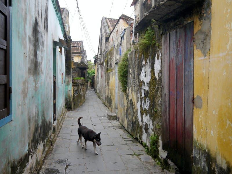Cão na rua estreita da cidade velha Hoi An com as paredes coloridas do musgo fotografia de stock royalty free