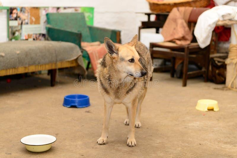Cão no abrigo fotografia de stock royalty free
