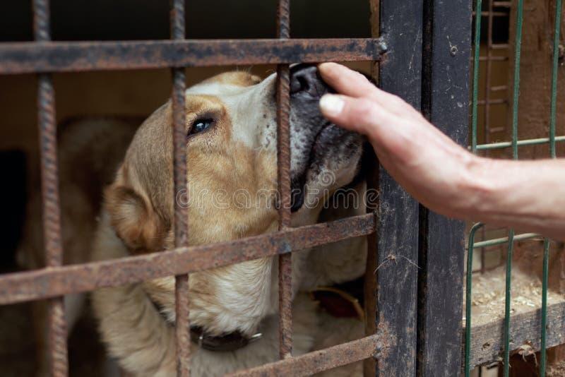 Cão no abrigo animal fotos de stock